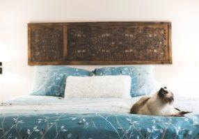 cat-rests-in-bedroom_4460x4460